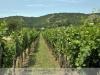 Móri - borvidék, Csókakő - Aranyhegyi szőlők