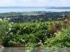 Balaton Csopak, Szent Donát pince és borház