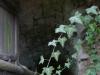 Erdőbénye – Pincesor