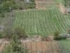 Mádi szőlők