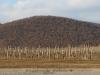 Tokaji borvidék - Erdőbénye  Béres szőlőbirtok